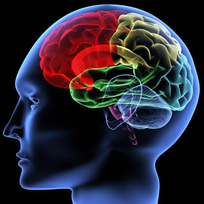 acquiring a 2nd languages protect the brain from strokes